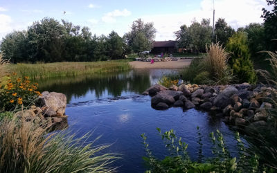 How to Reduce Algae in a Pond