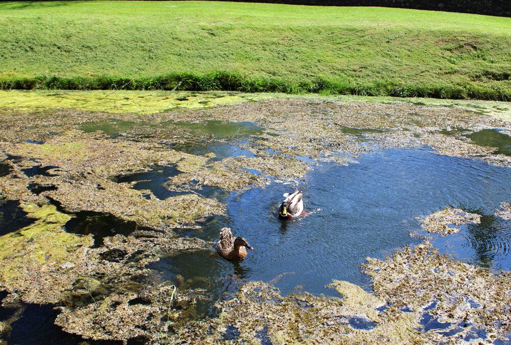 4 Common Reasons That Increase Pond Algae