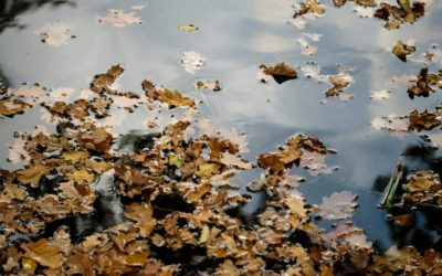 A Guide to Fall and Winter Pond Care