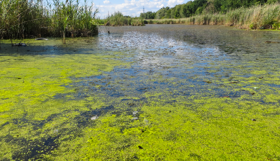 What is Algae and How Can You Avoid It?
