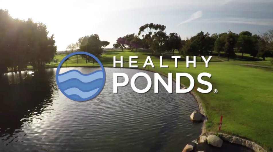 Organic Overgrowth and Biodegradable Pond Cleaner Solution