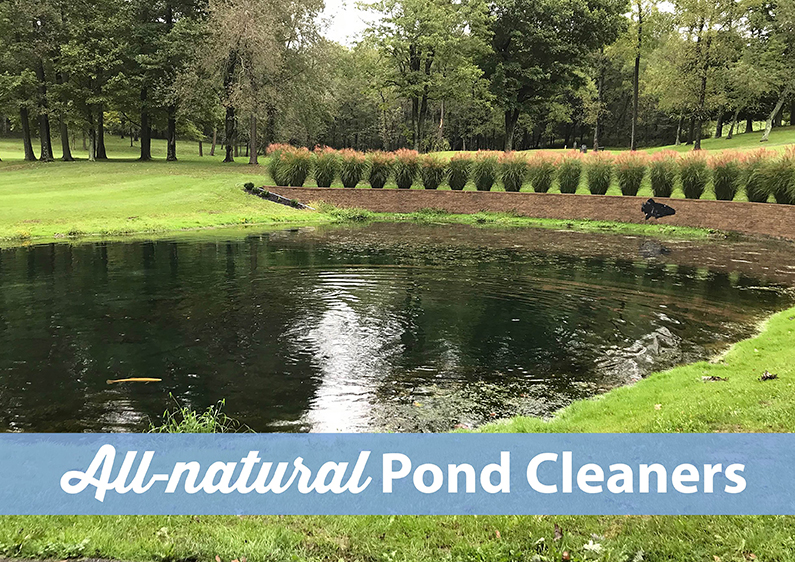 Why Treat Your Pond with All-natural Products?