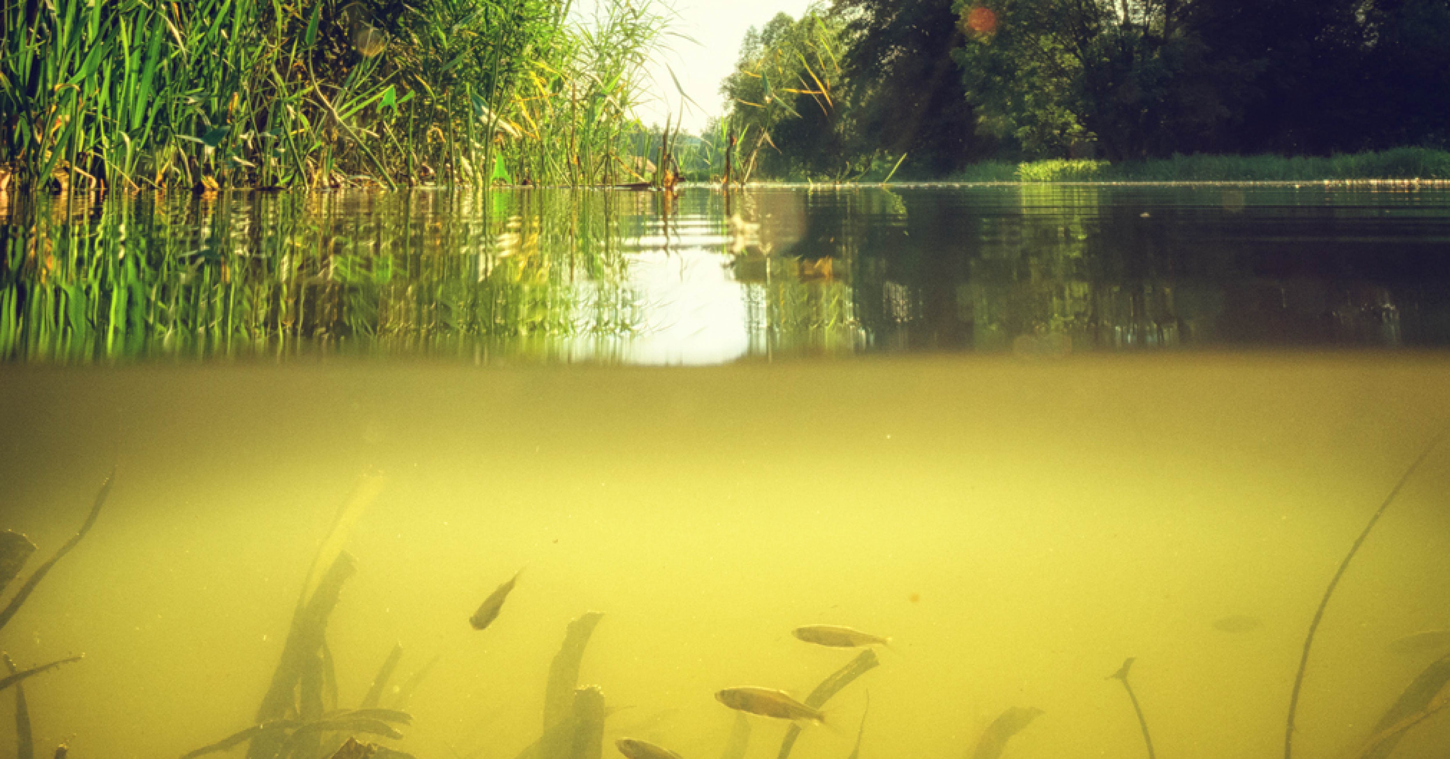 Green Pond Water with High Phosphorus Level in Need of Reducing