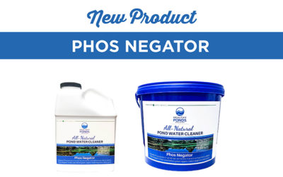What to Do When You Find Phosphorus in Your Pond