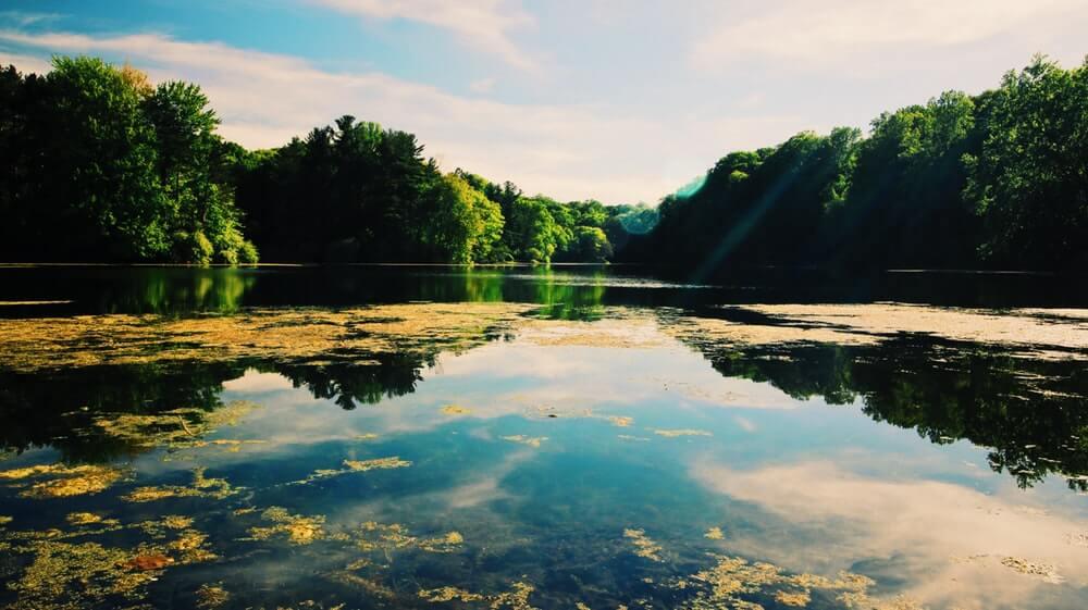 End of Summer Pond Issues & Algae Growth