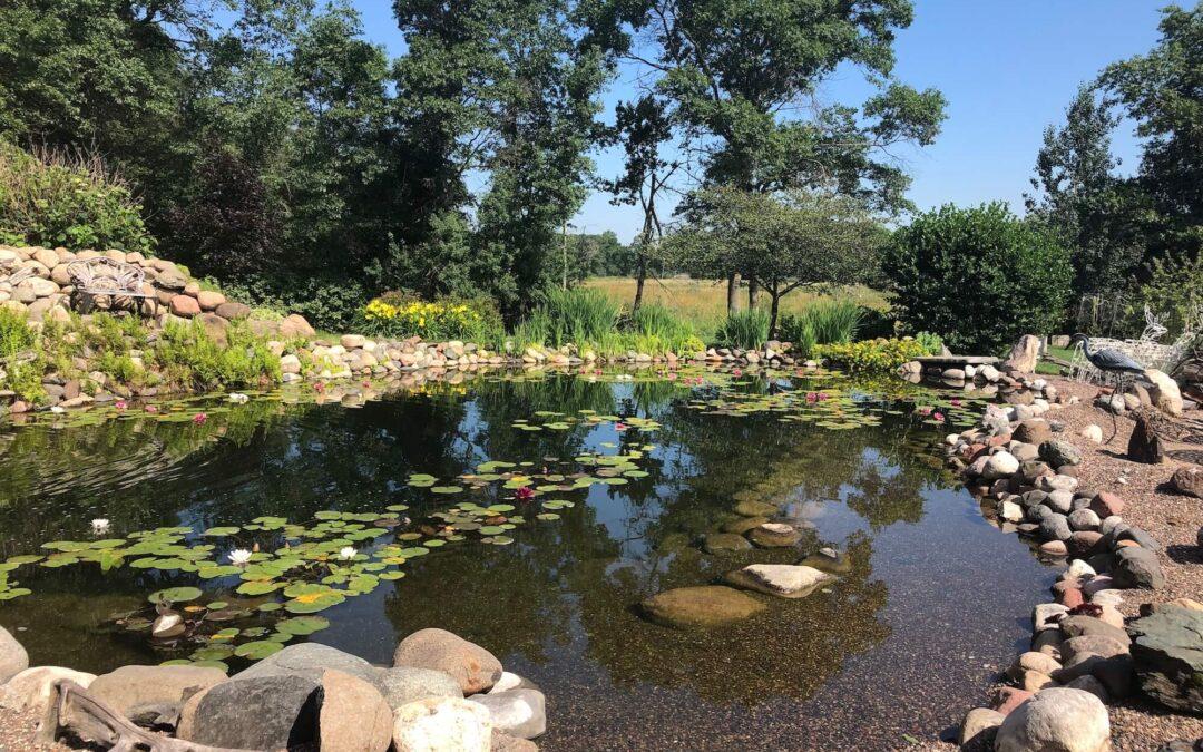 Customer Testimonial: Water Treatment for Pond in Full Sunlight